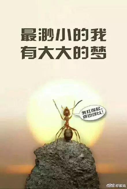每日一句正量人生感悟_仓鼠大米晚上吃几粒蜗牛图片
