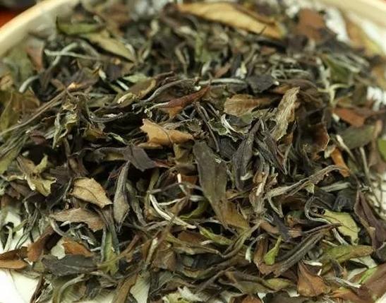 叶片不完整的白茶是劣质白茶吗_过程