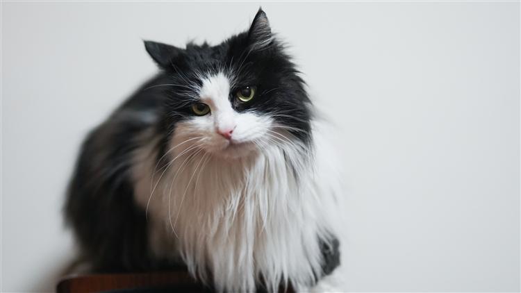 猫咪总是不理你?想让它爱上你,试试这些玩具