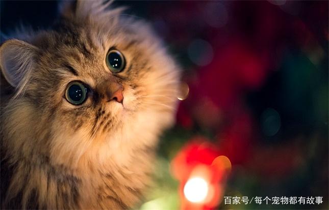 给猫喂化毛膏是有必要的,如果它不喜欢吃,那还有猫草和猫薄荷