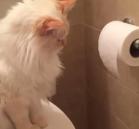 猫咪犯错误被骂,主人想跟它道歉时,发