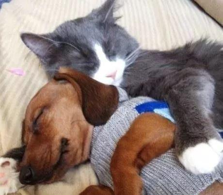 谁说狗和猫要是做不了朋友的?喵星人和狗狗在一起暖到炸!