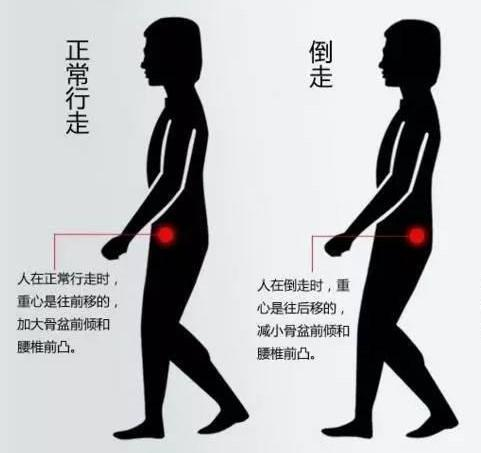 腰部骨骼固)�_在倒走时刚好相反,可以使颈部,腰部等处于紧张状态的肌肉群和骨骼得到
