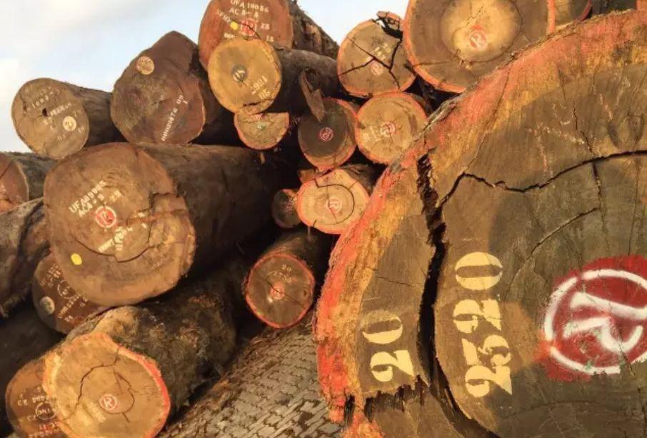 2019年缅甸仍将减少砍伐生产量-老挝红酸枝