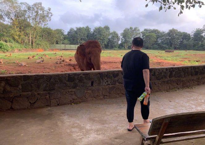 德云社孙越再晒喂大象照,调侃工作开始,被网友的评论乐
