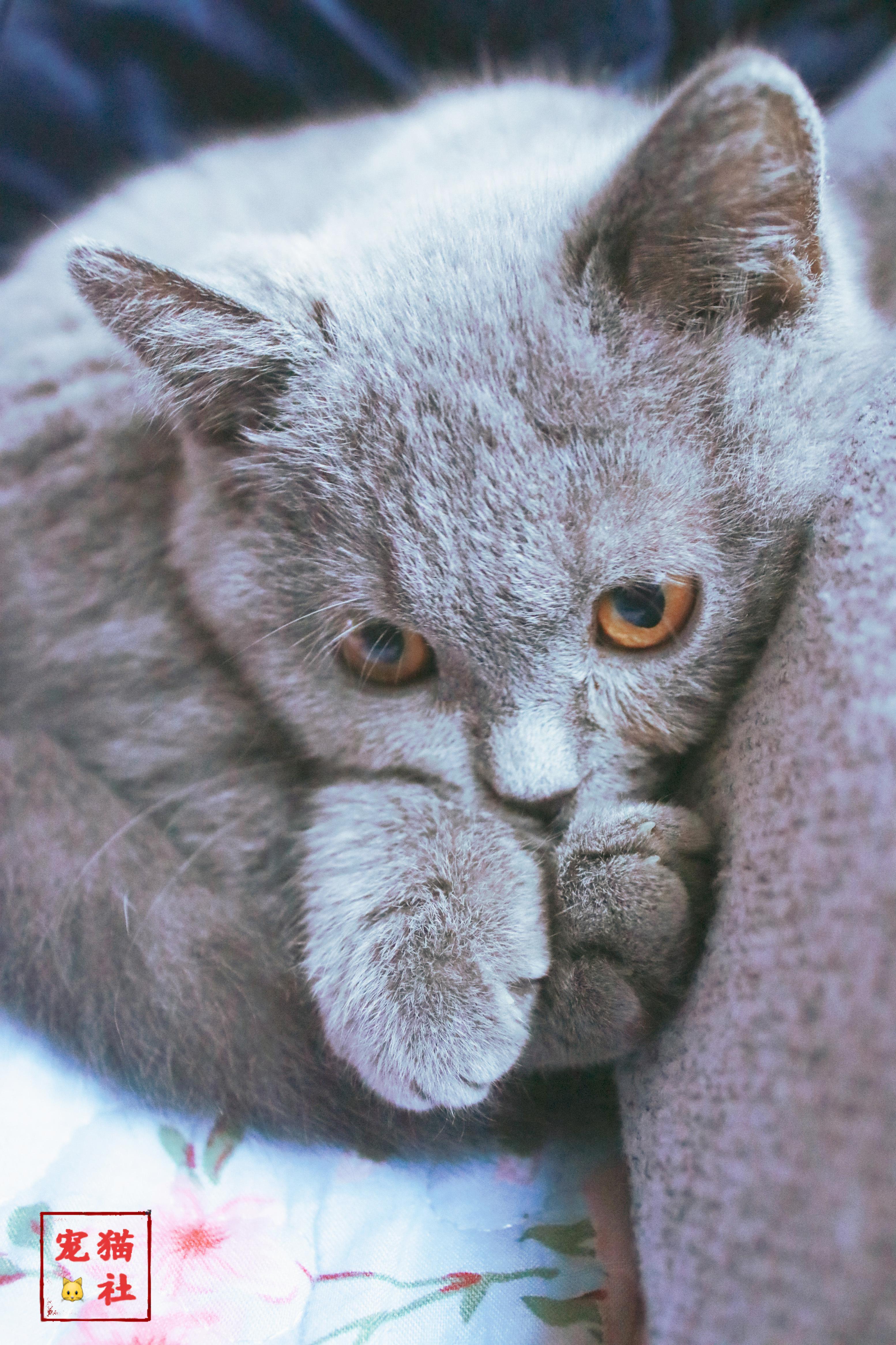 貓咪拉血便血但精神很好是怎麼回事 怎麼辦 萌寵 第1張