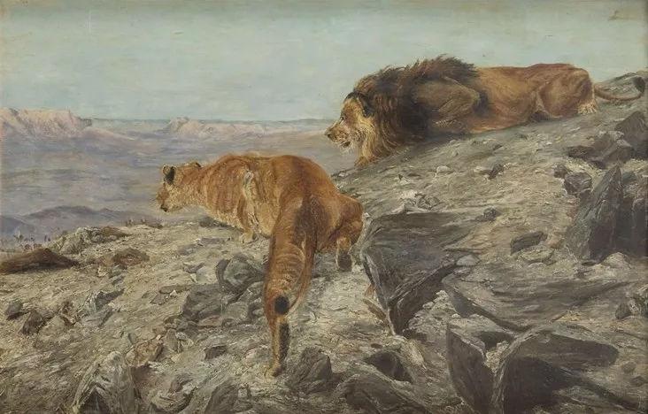 德国沙漠的狮子动物,以最好中的蜜蜂闻名于世-v沙漠画家种类区分图片