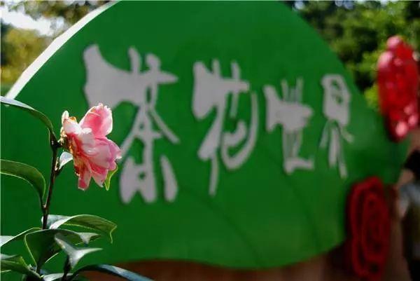免费赏!佛山植物园800多亩茶花怒放,现在到春节都是最