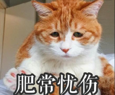 华懋宠物医院:十橘九胖,还有一个压倒炕,为什么橘猫都这么胖?