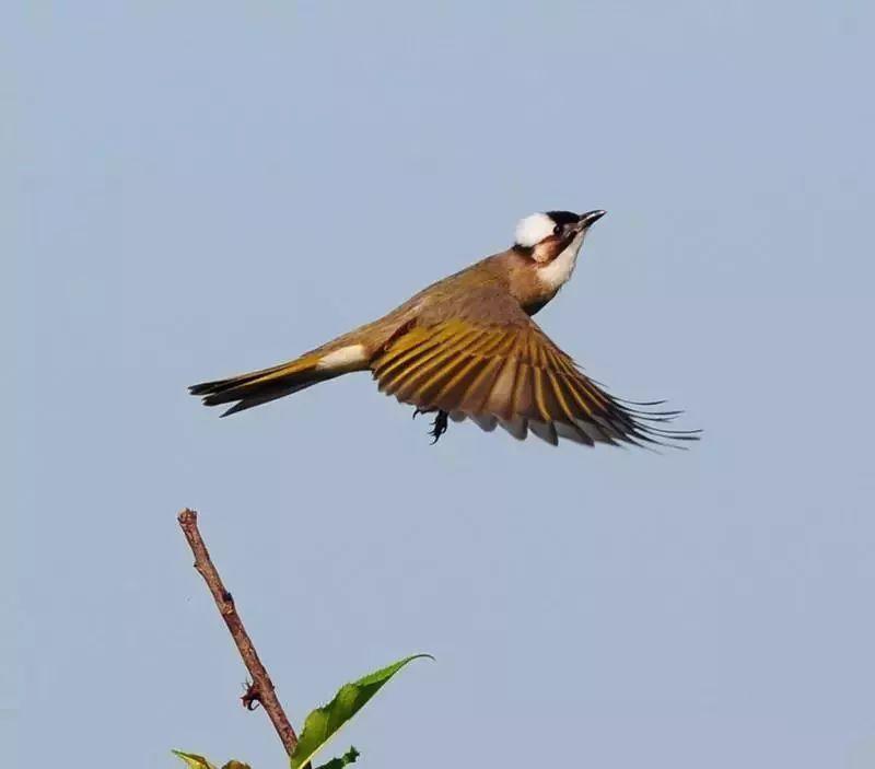 我走近鸟儿时,它们为何都飞走了?