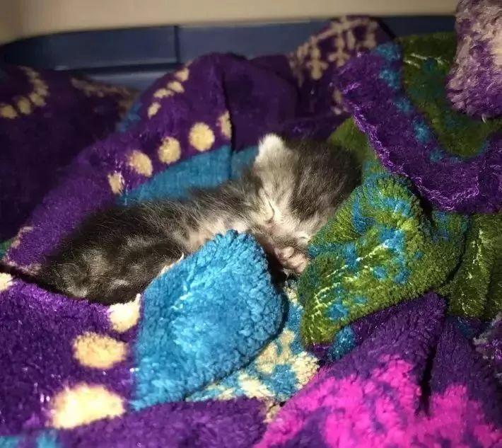 路边捡回来的奶猫养了几个月,却一点也没长大