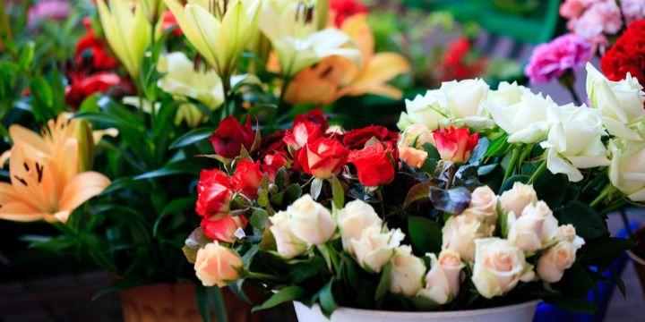 爱优尚布展最大年宵花市,上海年节花卉市场已达3亿元