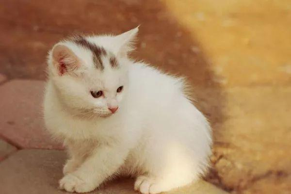 你的猫咪爱咬纸吗?