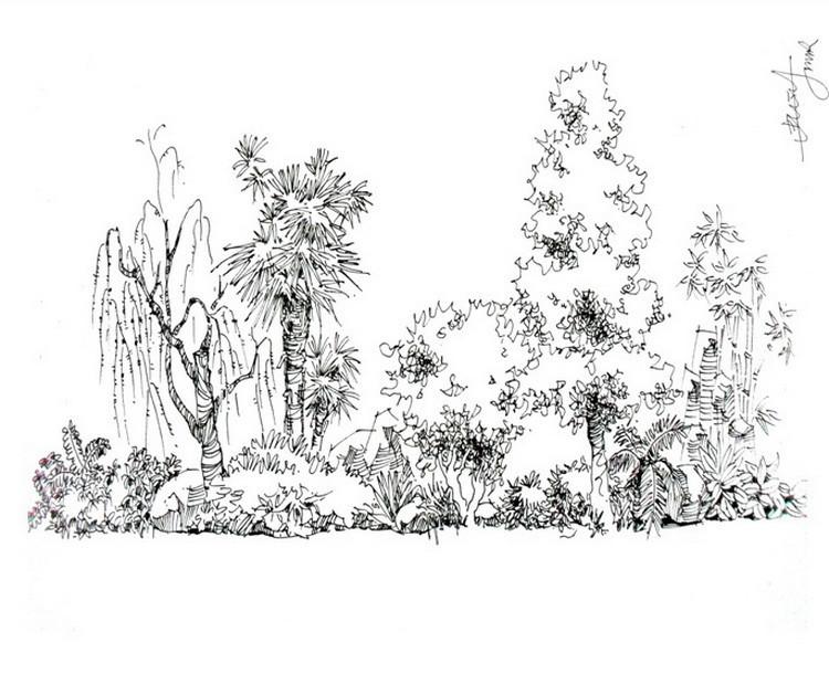 画速写植物时的用笔笔法