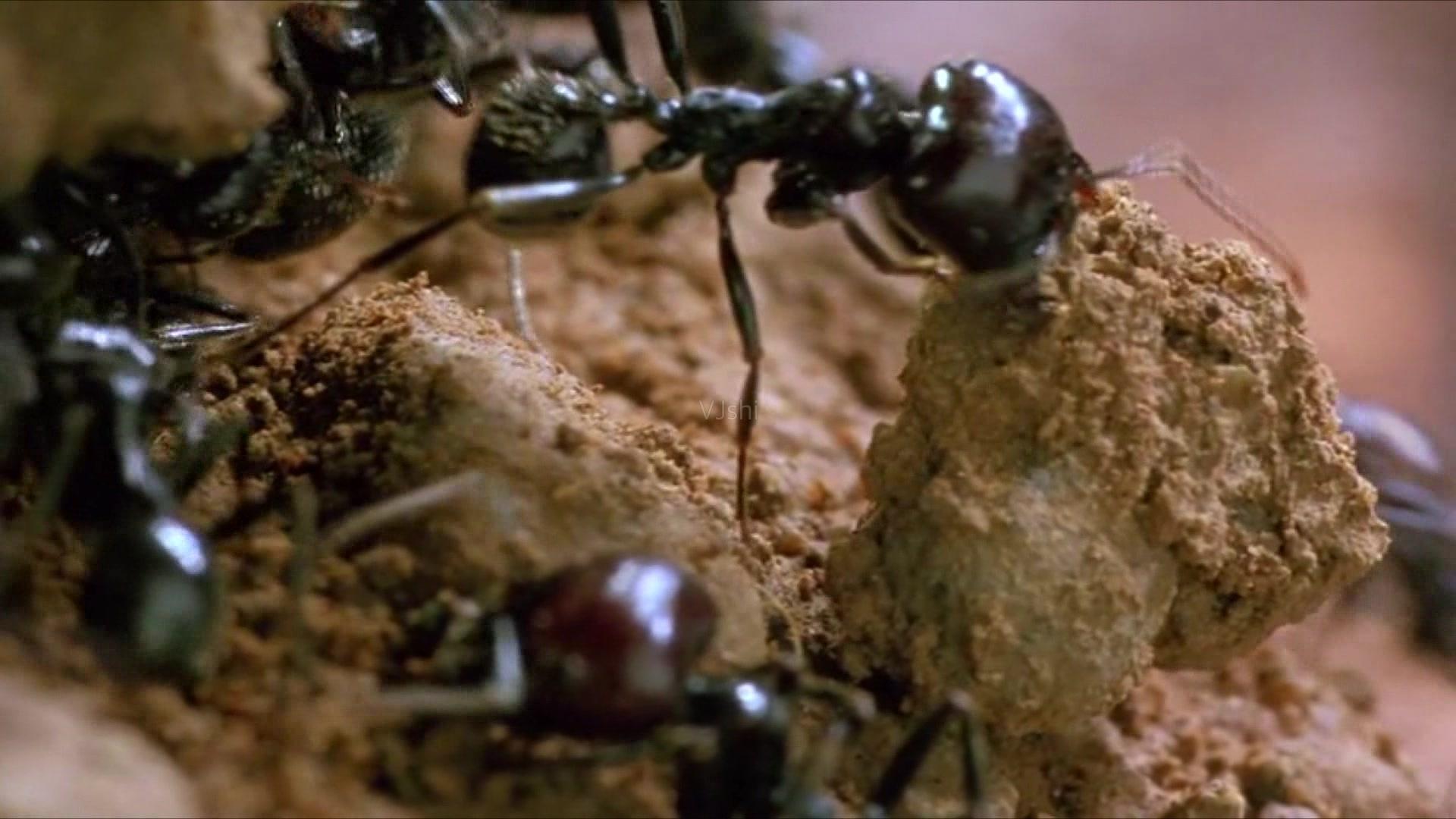 世界上最大的蚂蚁窝,面积相当于英国,白蚁们挖了3800年