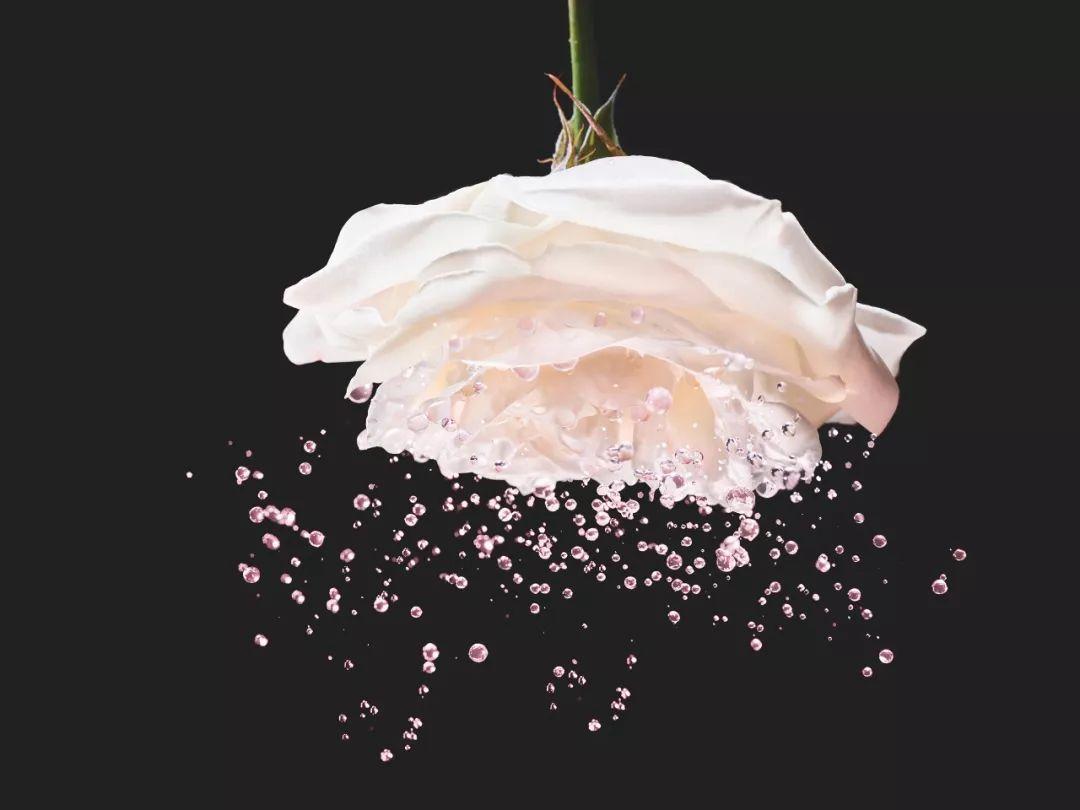 迪奥护肤品系列_萃取自格兰维尔玫瑰,DIOR迪奥花秘瑰萃系列引领美肤新趋势_肌肤