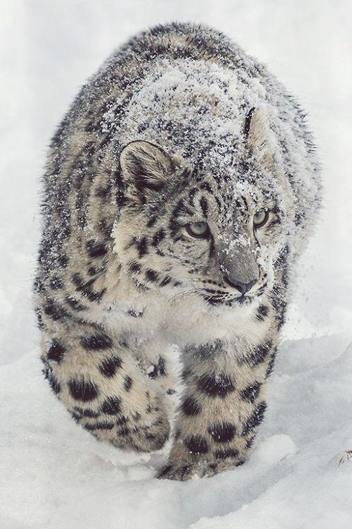 最漂亮的四种猫科动物,猫的种类太杂只能友情客串