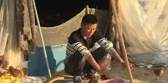 养鸡被骗了怎么办_养鸡回收骗局揭秘_被骗600多万!损失惨重...