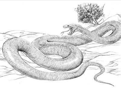据说它曾捕食鲨鱼和恐龙——沃那比蛇