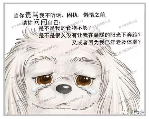 美国狗证上的七句话(我没看完已泪流满面……)(图6)