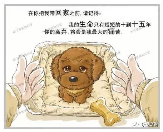 美国狗证上的七句话(我没看完已泪流满面……)(图4)