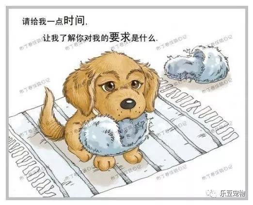 美国狗证上的七句话(我没看完已泪流满面……)(图3)