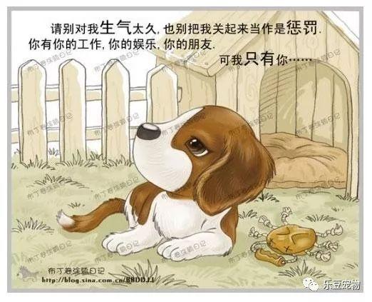 美国狗证上的七句话(我没看完已泪流满面……)(图5)