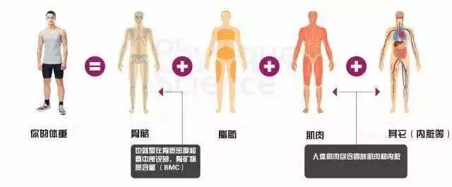 运动减肥体重图片