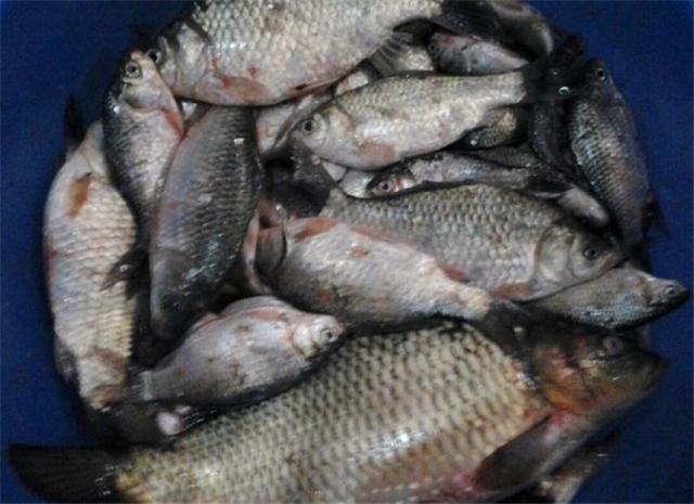 冬季冰鲈鱼的家常做法大全钓这几个小技巧一定要做到位才能保证鱼