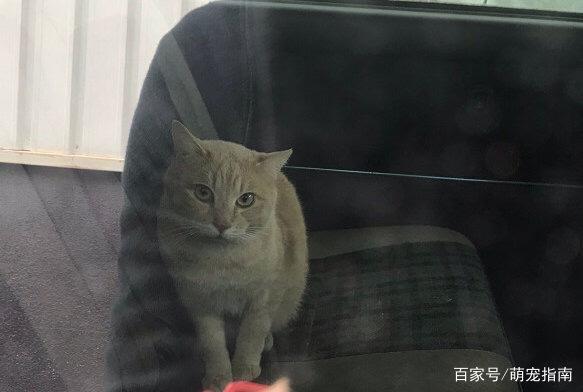 流浪猫鲍勃拍续集意味着什么?流浪猫鲍勃拍续集背后的真相