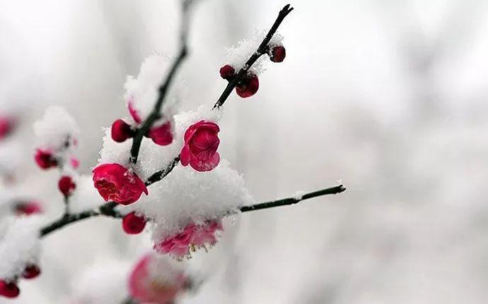 冬日读诗|墙角数枝梅,凌寒独自开图片