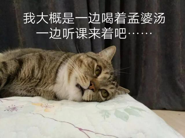 猫:睡觉一定要抱腿,不然jiojio会跑掉_床上