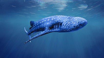 为什么鲸鱼身后,会产生可怕爆炸?遇到停顿的鲸鱼请阔别