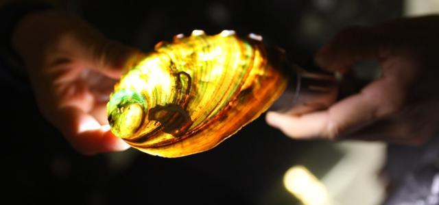 找找色成人_这里有1万只贝壳,还有4.5亿年前的宝贝_鹦鹉螺