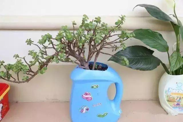 洗衣液的瓶子做的花盆,还是很有感觉的!