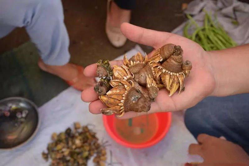 外形獨特像雞爪,吃過絕對忘不了,一斤30元可遇不可求_雞爪多少錢一斤