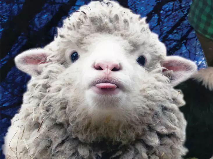 从自费出版到各大出版社竞相抢购,全美国都在宠这只羊