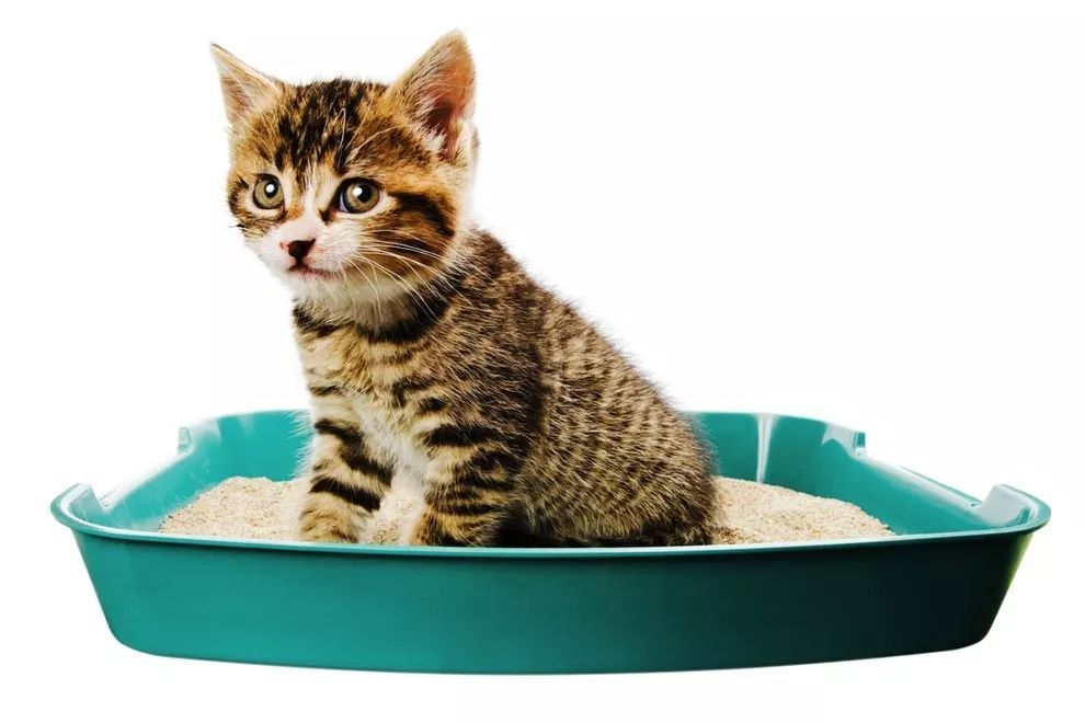 猫咪尿床怎么办图片