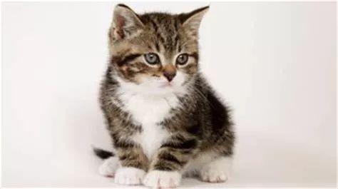 猫尿床上怎么办图片