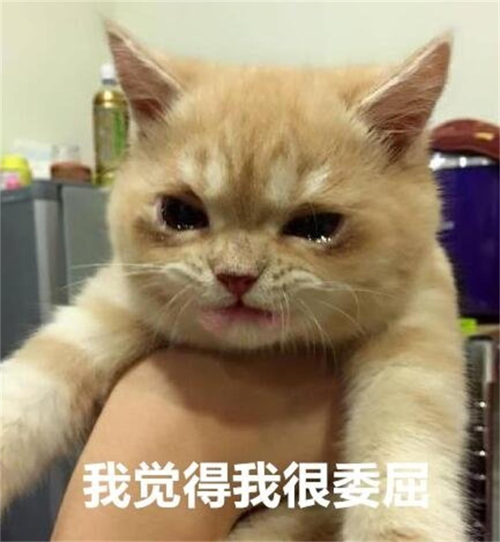 猫咪简笔画