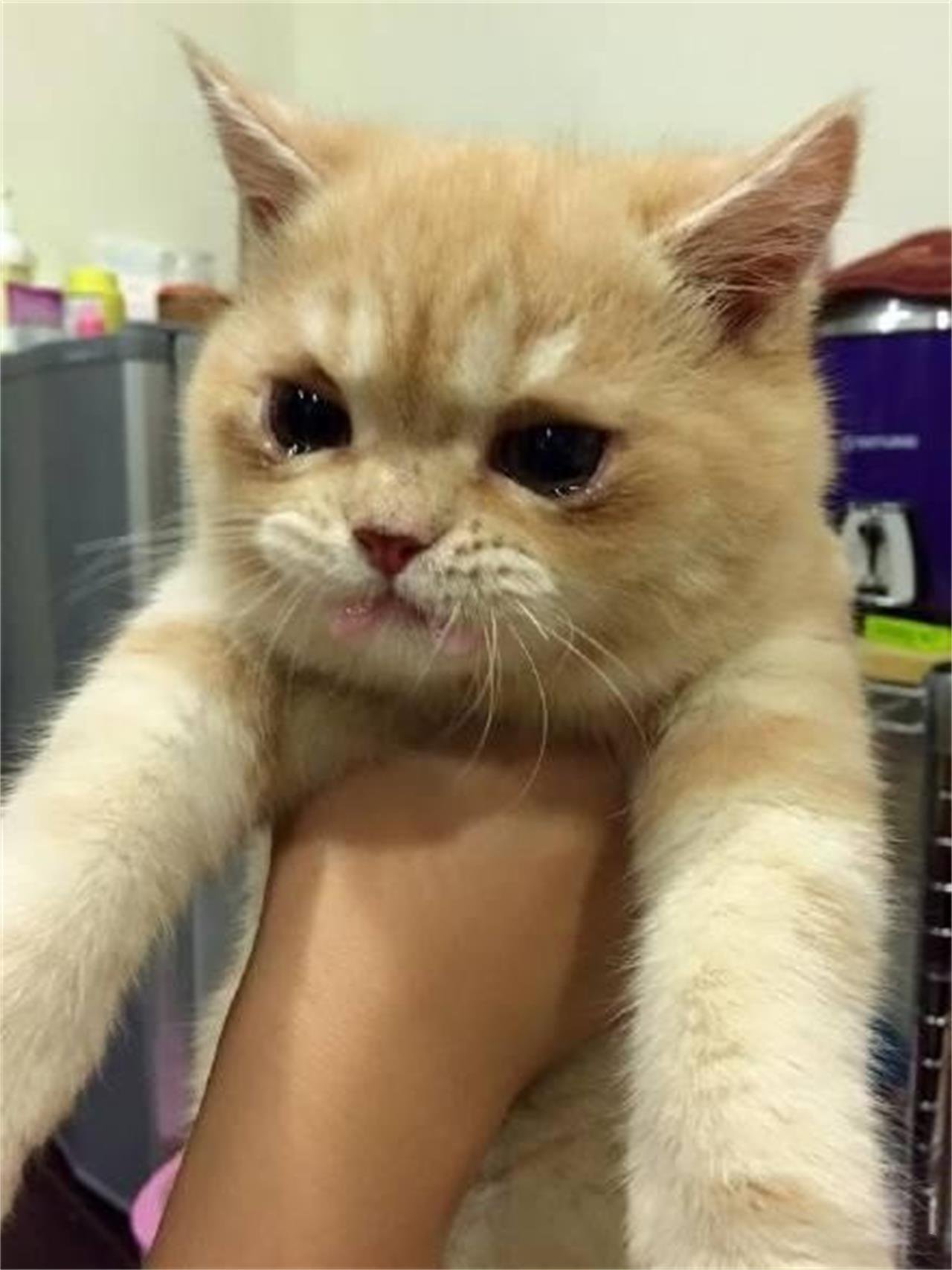 可爱猫咪情侣头像