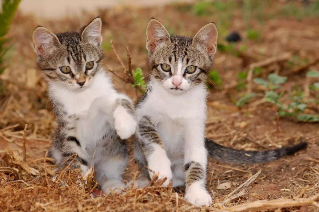 猫尿床上图片