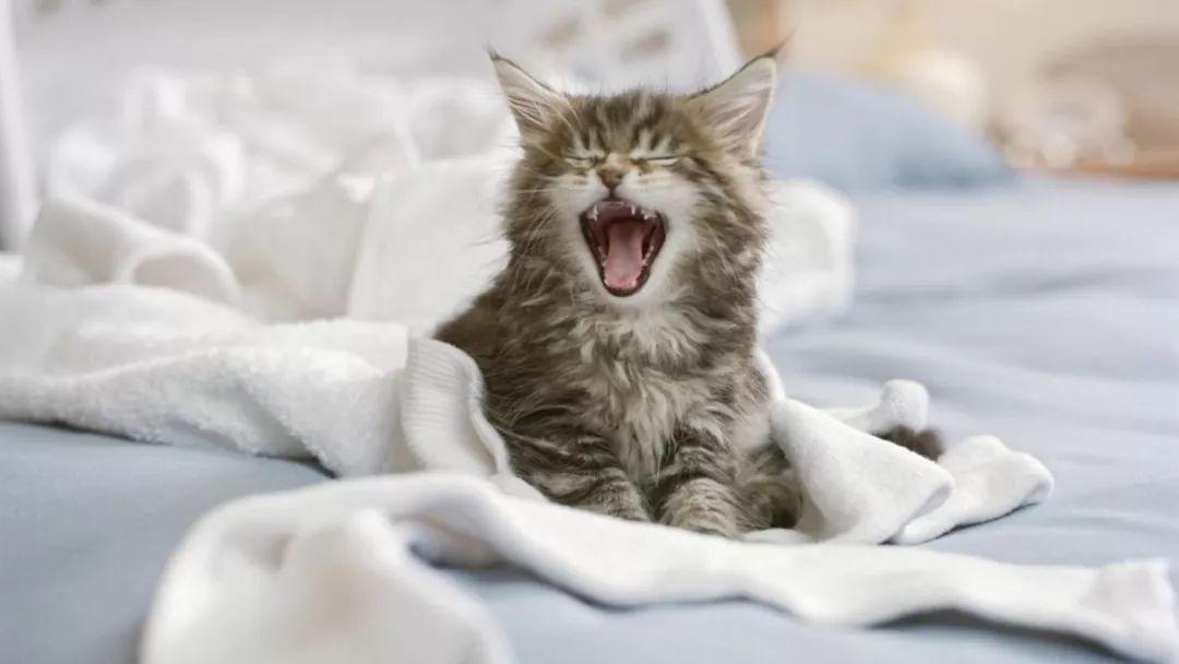 猫咪尿床图片