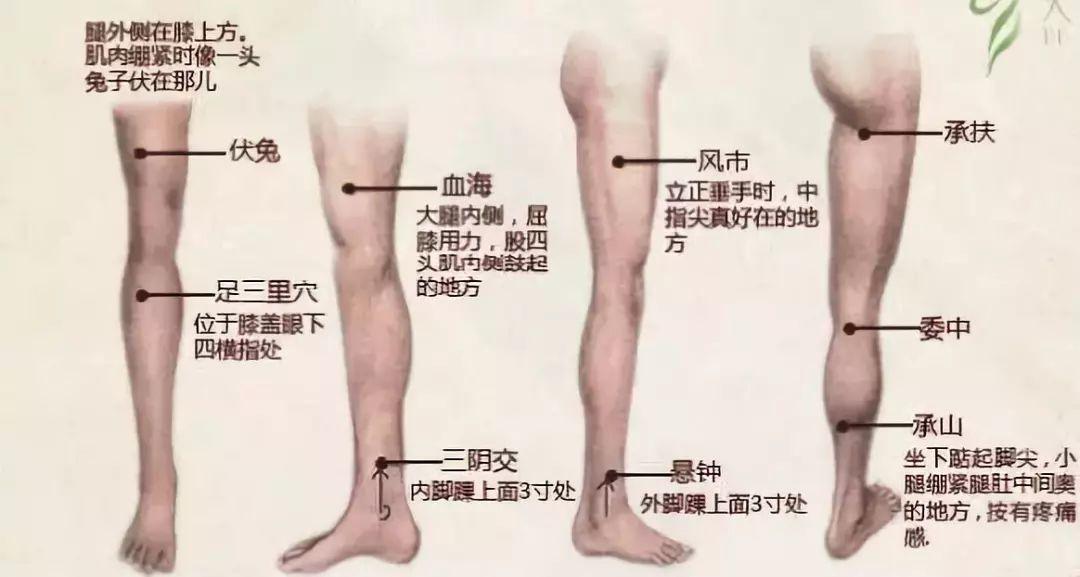 腿部刮痧减肥的正确方法图片