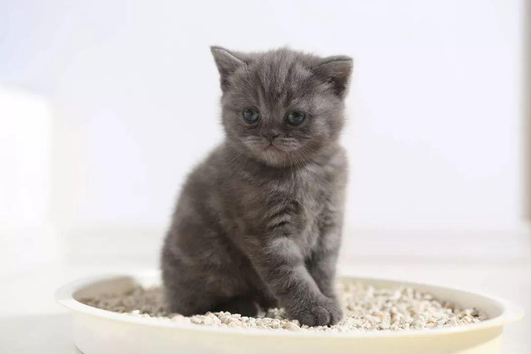 猫总是尿床怎么教育图片