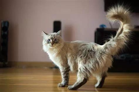 猫尿床是个什么心理图片