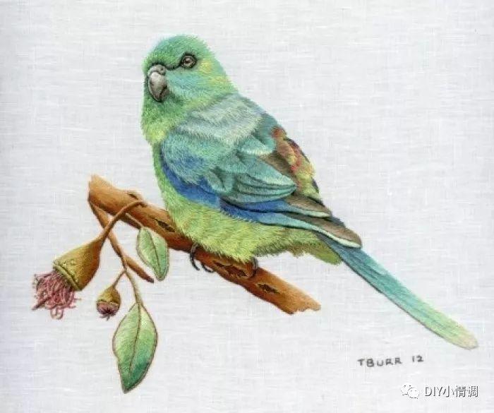 壁纸 动物 鸟 鹦鹉 700_585图片