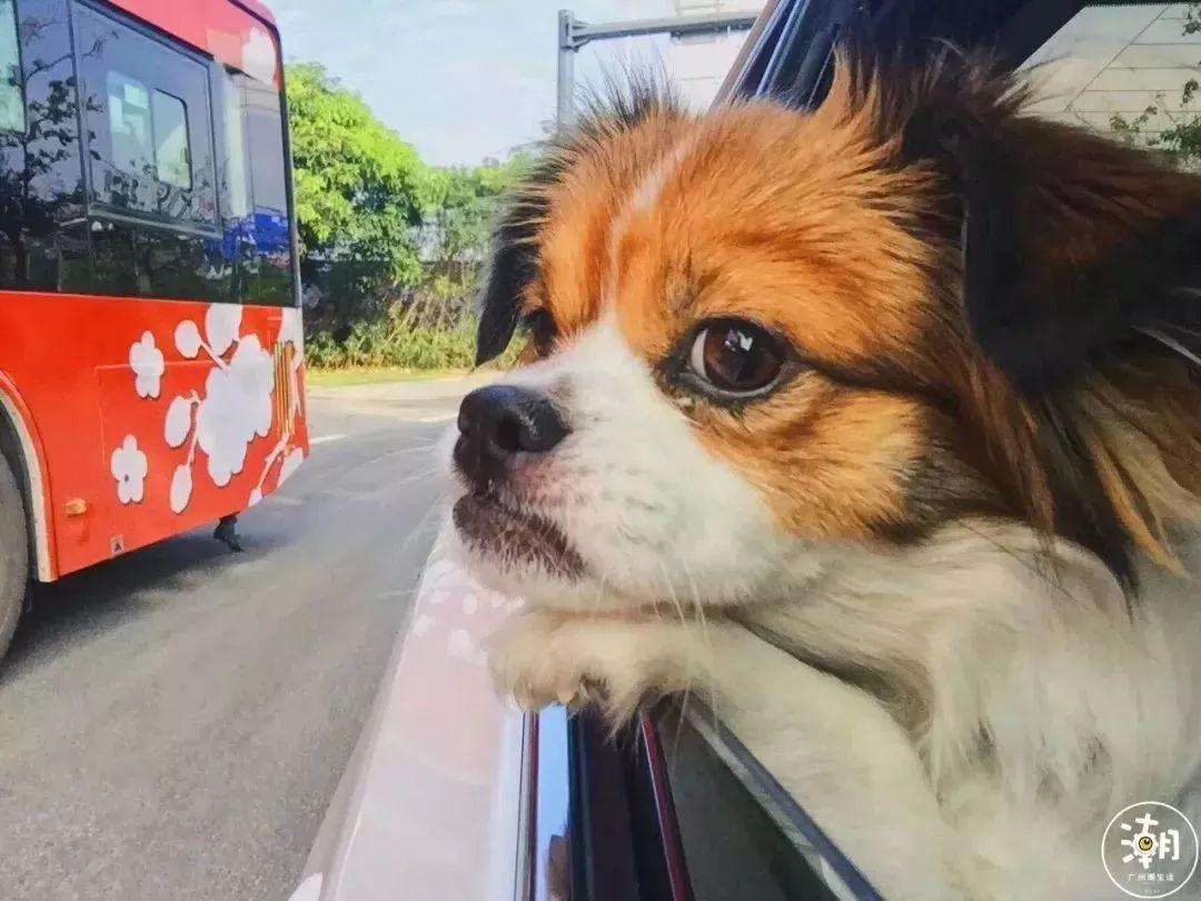 在广州,月薪5千,存款为0,却义无反顾地养了条狗!(图25)