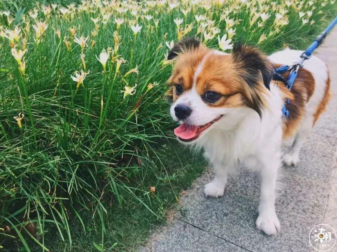 在广州,月薪5千,存款为0,却义无反顾地养了条狗!(图23)
