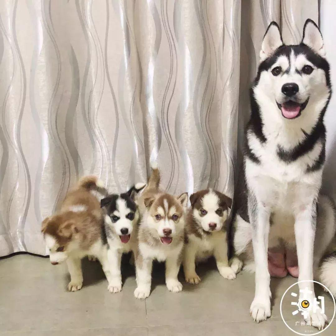 在广州,月薪5千,存款为0,却义无反顾地养了条狗!(图20)